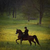 images/photo_gallery/afires_heir_pasture_saddle-0407.jpg