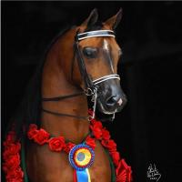 images/photo_gallery/bridle_front.jpg